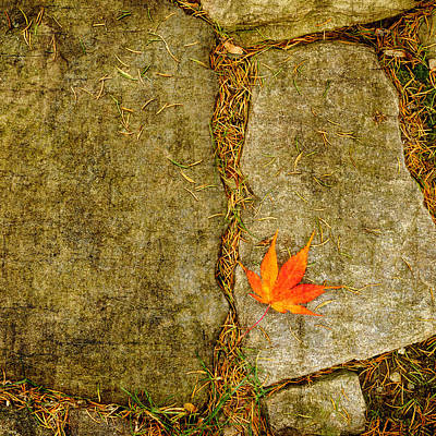 Photograph - Leaf On Stones Squared by Marianne Campolongo