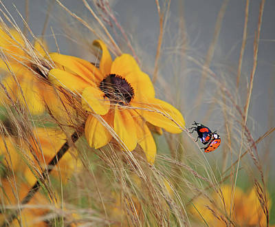 Ladybug Photograph - Colors Of Summer by Anna Cseresnjes