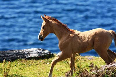 Young Horses Photograph - Colt  by Aidan Moran