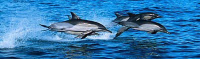 Common Dolphins Breaching In The Sea Art Print by Panoramic Images