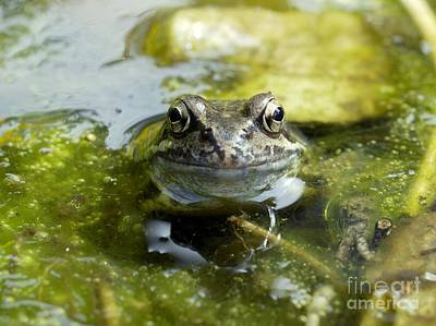 Common Frog Art Print