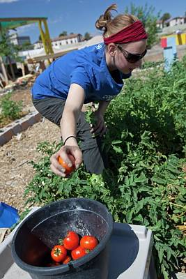 Tonopah Photograph - Community Garden Volunteer by Jim West