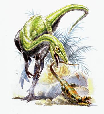Paleozoology Photograph - Compsognathus Dinosaur by Deagostini/uig