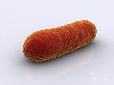 Conceptual Image Of Bacteria Art Print by Stocktrek Images