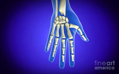Human Joint Digital Art - Conceptual Image Of Bones In Human Hand by Stocktrek Images