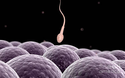 Conceptual Image Of Fertilization Art Print by Stocktrek Images