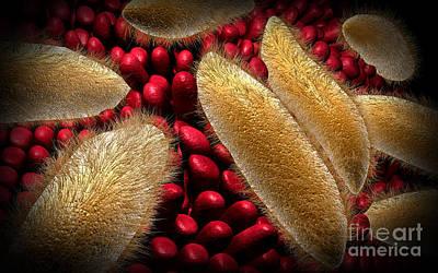 Conceptual Image Of Paramecium Print by Stocktrek Images
