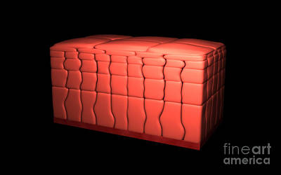 Conceptual Image Of Stratified Squamous Art Print
