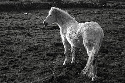 Photograph - Connemara Pony Ireland by Pierre Leclerc Photography
