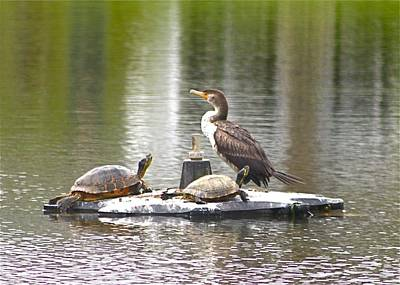 Photograph - Cormorant And Turtle Duo by Jeanne Kay Juhos