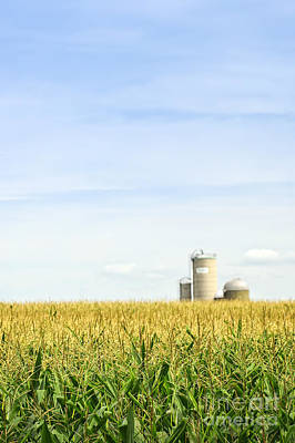Cornfields Photograph - Corn Field With Silos by Elena Elisseeva