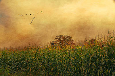Cornfield And Fog Art Print
