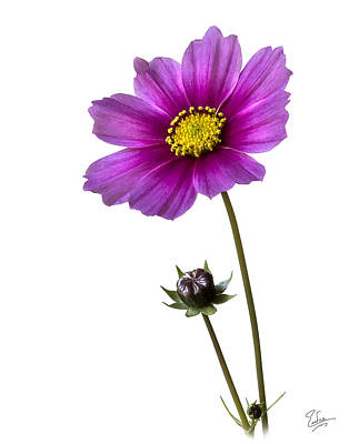 Photograph - Cosmos by Endre Balogh
