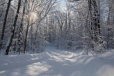 Winter Trees Photograph - Cottage Country Winter by Pat Speirs
