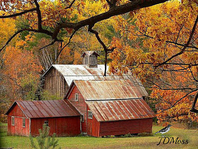Photograph - Country Living by Janet Moss