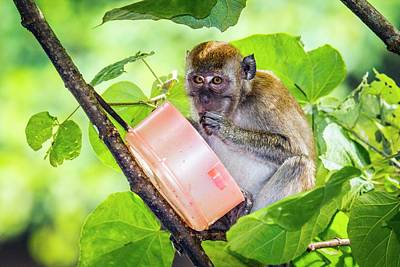 Long Tailed Photograph - Crab-eating Macaque by Paul Williams