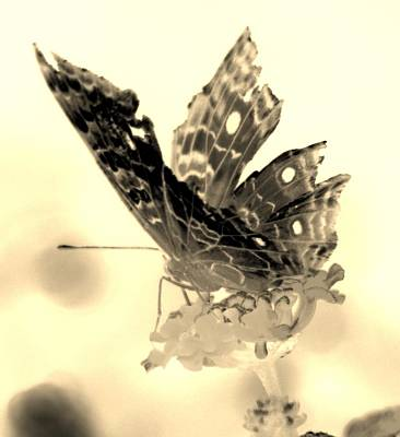 Still Life Royalty-Free and Rights-Managed Images - Cracked Wing Light Sepia Close by Rob Hans