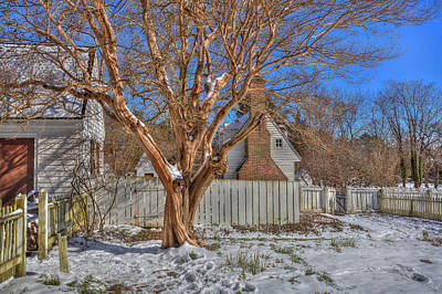 Photograph - Crepe Myrtle Williamsburg Garden Winter by Jerry Gammon