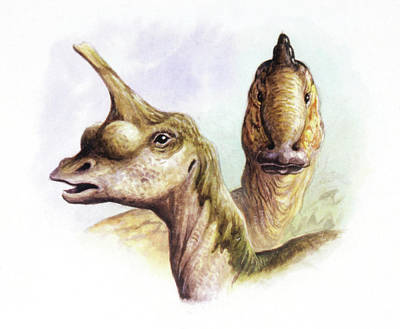 Paleozoology Photograph - Cretaceous Hadrosaurs by Deagostini/uig