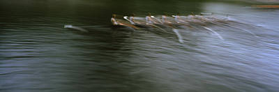 Rowers Photograph - Crew Racing, Seattle, Washington State by Panoramic Images