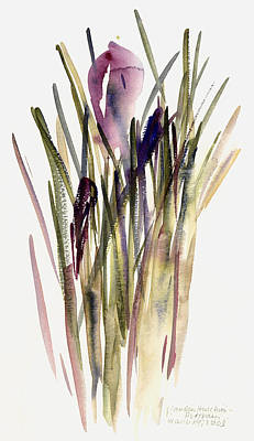 Crocus Painting - Crocus by Claudia Hutchins-Puechavy