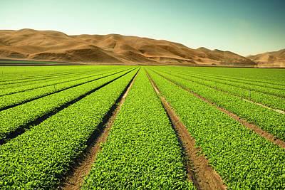 Photograph - Crops Grow On Fertile Farm Land by Pgiam