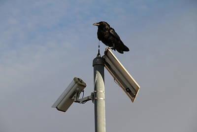 Crow Original