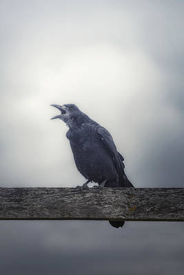Black Birds Photograph - Crow by Joana Kruse