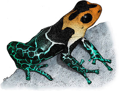 Photograph - Crowned Poison Frog by Roger Hall