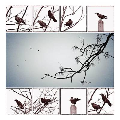 Collage Photograph - Crows by Marianna Mills
