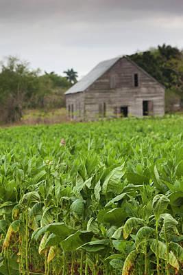 Del Rio Photograph - Cuba, Pinar Del Rio Province, San Luis by Walter Bibikow