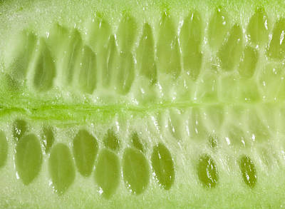 Nutrient Photograph - Cucumber by Tom Gowanlock