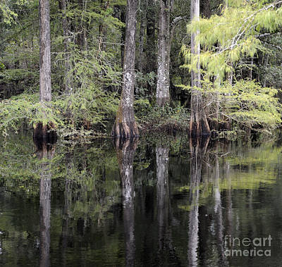 Photograph - Cypress Reflections by Nancy Greenland