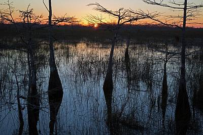 Cypress Swamp At Sunrise Art Print