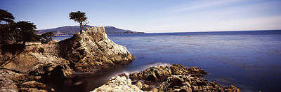 Lone Cypress Photograph - Cypress Tree At The Coast, The Lone by Panoramic Images