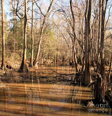 Photograph - Cypress Waterway by Adam Jewell
