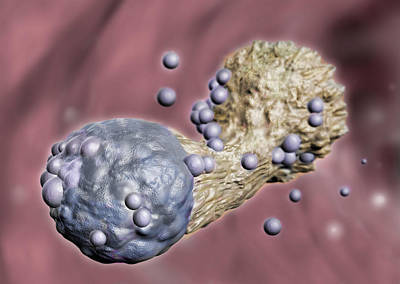 Photograph - Cytotoxic T Cell Attacking Cancer by Spencer Sutton