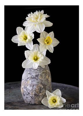 Amaryllis Photograph - Daffodils by Edward Fielding