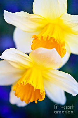 Art Print featuring the photograph Daffodils by Roselynne Broussard