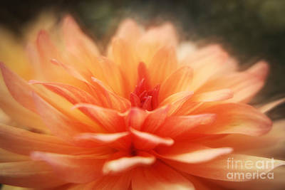 Dahlia Blooming Art Print by LHJB Photography