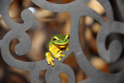 Photograph - Dainty Tree Frog by Debbie Cundy