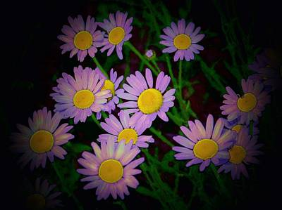 Art Print featuring the photograph Daisies I by Shirley Moravec