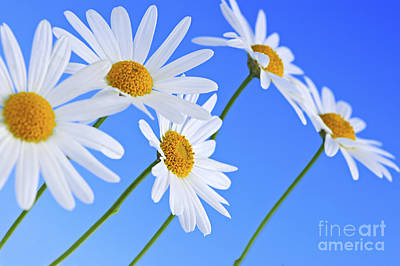 Curated Beach Towels - Daisy flowers on blue background by Elena Elisseeva
