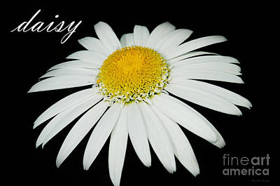 Photograph - Daisy by MaryJane Armstrong