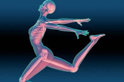 Human Skeleton Photograph - Dancer's Skeleton by Carol & Mike Werner