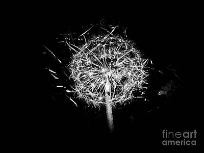 Photograph - Dandelion by Fei Alexander