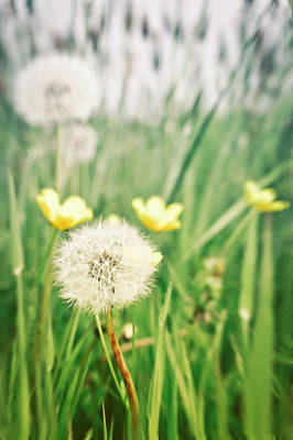 Querformat Photograph - Dandelions And Buttercups by Tom Gowanlock