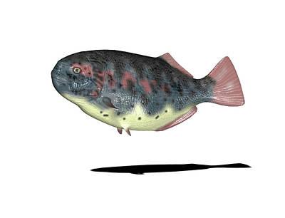 Paleozoology Photograph - Dapedium Prehistoric Fish by Friedrich Saurer