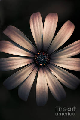 Photograph - Dark Flower by Jorgo Photography - Wall Art Gallery