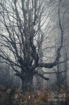 Dark Forest Art Print by HD Connelly